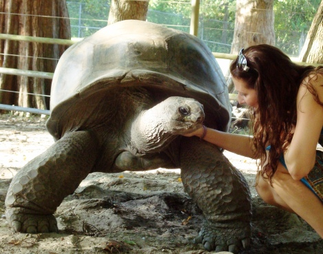Magma The Aldabra Tortoise