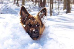 Some cat and dog breeds are well adapted to cold weather, but the majority of them are not.