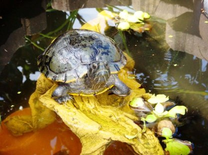 Little David in his pond