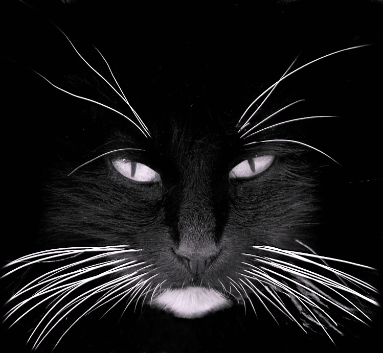 Whisker Stress -Does Y...