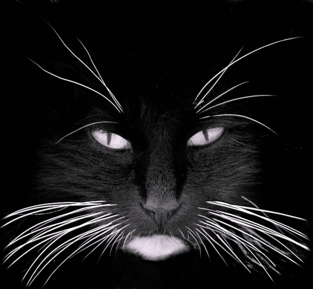 black_cat_white_whiskers