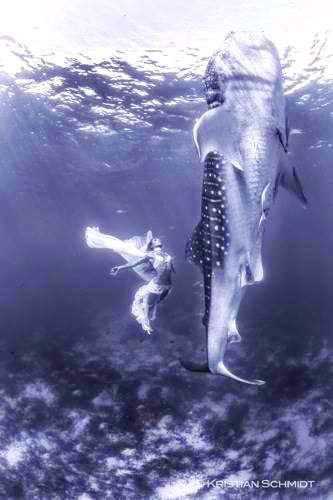 Extraordinary-fashion-shoot-with-huge-whale-sharks4
