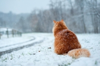 Lonely cat waiting by the road by Shutterstock