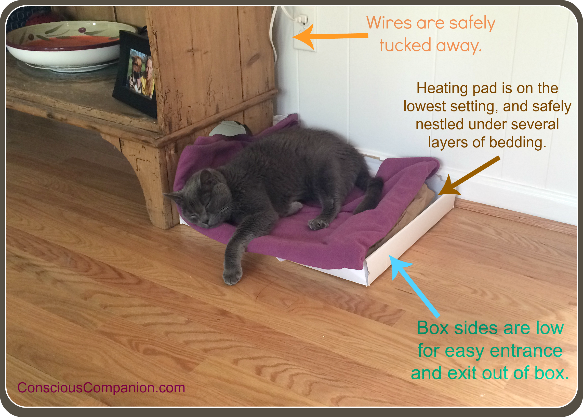 pet heating pads_senior cats_arthritis .png