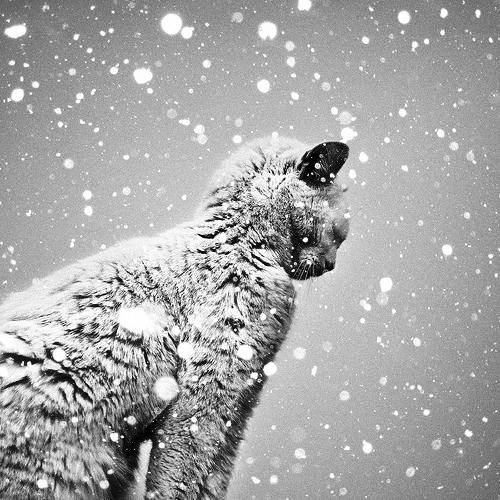 Cold Cat Winter