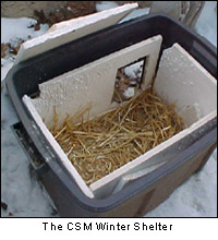 cat shelter winter outdoor cats