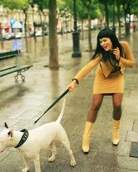 dog pulling human