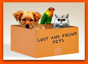 lost-and-found-pets