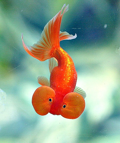 cool pet fish species