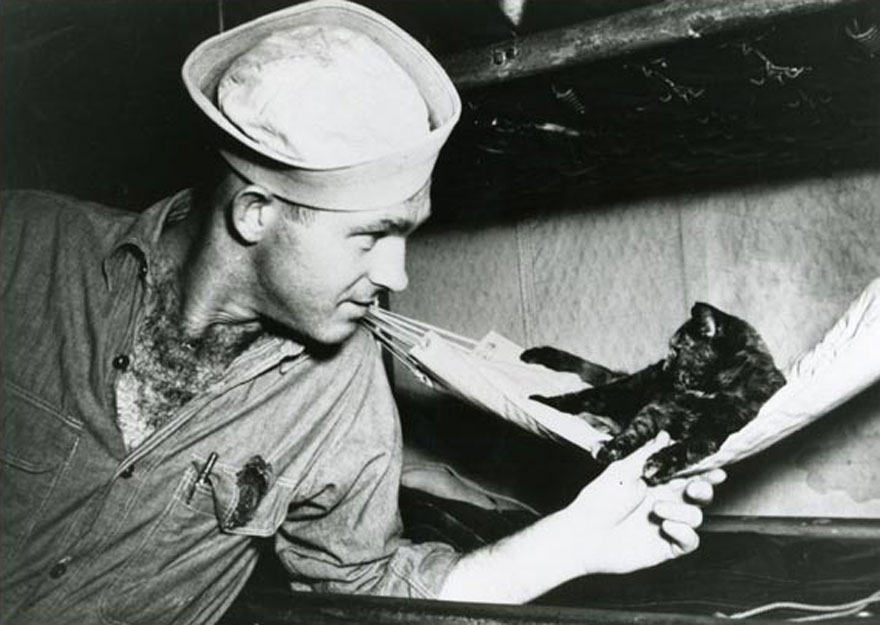 cool-cats-war-hammocks-marine-hats