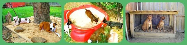 Dog Sand Box