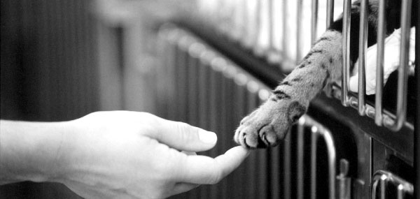 hand-and-paw
