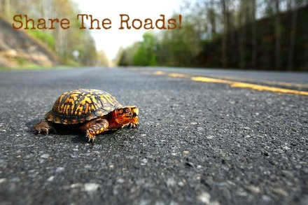 World Turtle Day, Share the Roads!