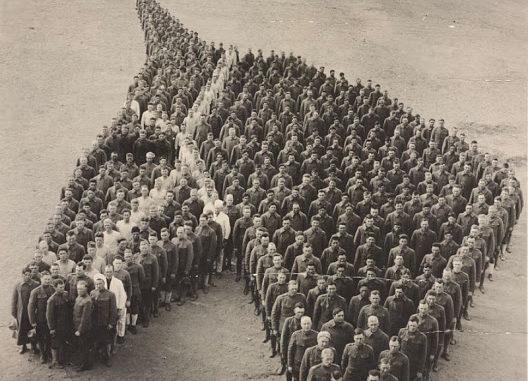 war horse_memorial day_animals who serve