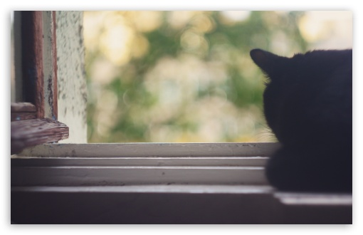 black_cat_near_window-t2