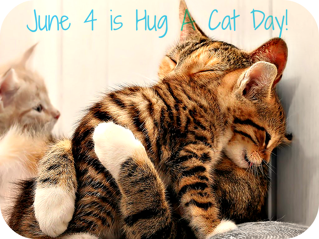 Today is Cat Day 48