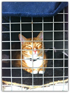 Knox in his kennel in the car