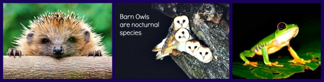 Hedgehogs, red-eyed treefrogs and barn owls are true nocturnal species