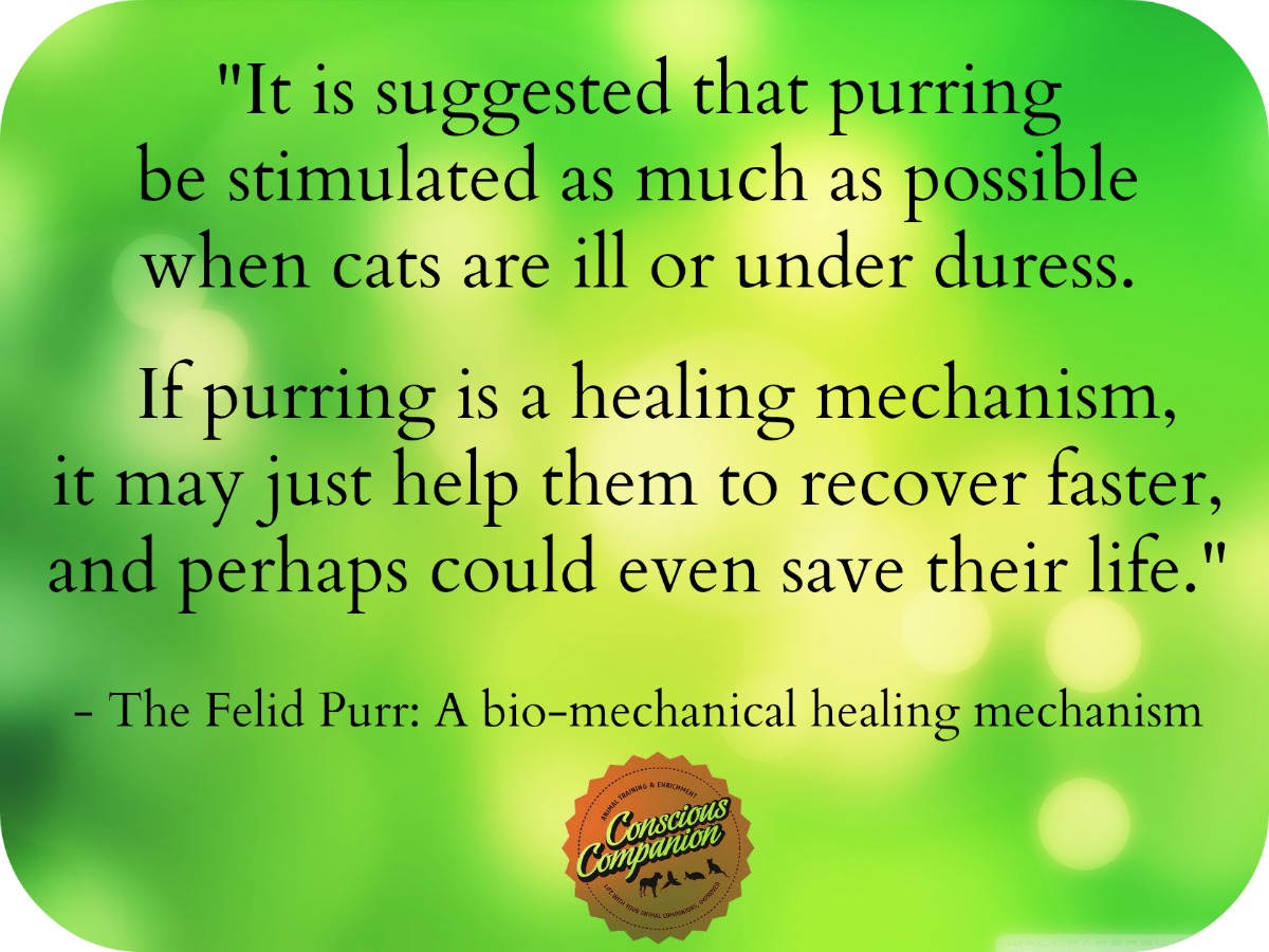 What s In A Purr The Healing Power of PURRS – Conscious panion