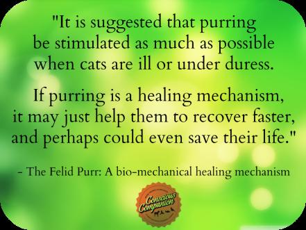 Cat purring health benefits