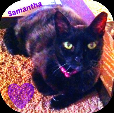 My beloved cat sammy