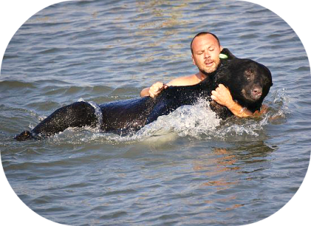 bear rescued from water