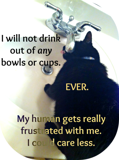 This is the only way I will drink water. I've been known to sit here for over a half an hour waiting for my human to notice me. I will sit here all night waiting to drink from the Flowing Water Source.