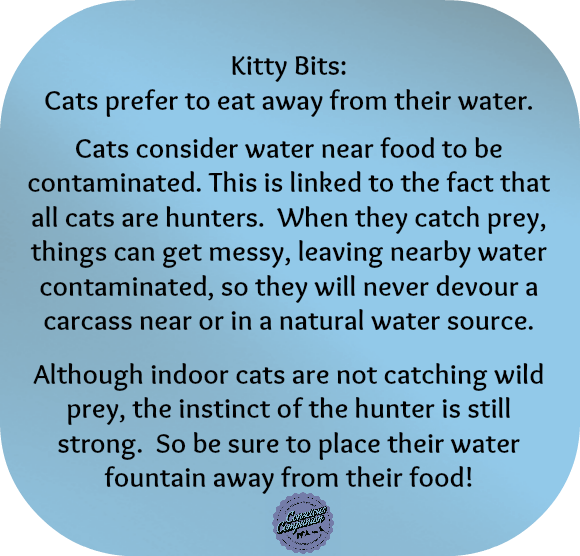 cat facts_feline facts_pet tips_cat water fountain
