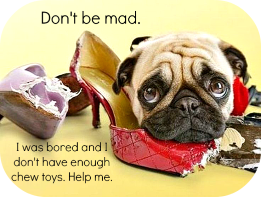 Hey, if you left them out and they smell like you, they are going to get chewed. Don't be angry.  Prevent it and provide appropriate toys for them to chew!