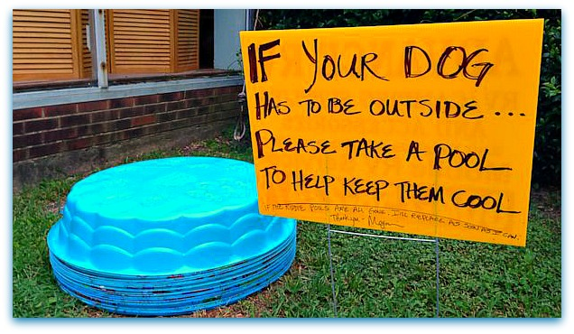 Pools Places Outside Megan's Cafe with a Sign to Please Take A Pool to Keep Your Canine Cool!