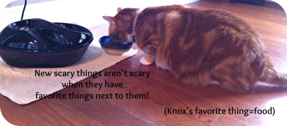 Knox is the Scaredy Cat in the group so I had to feed him by the water fountain until he realized it wasn't a monster.