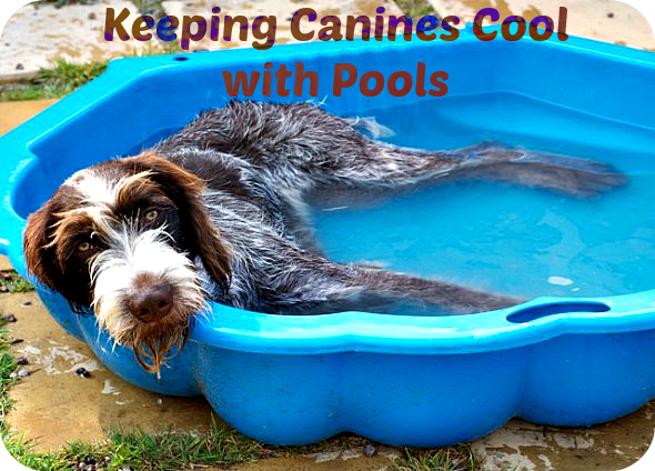 Kiddie Pool for Pets and dogs