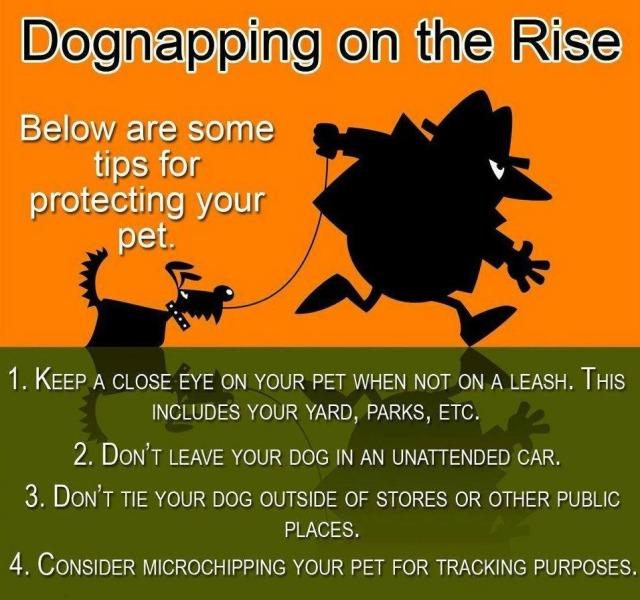 Stop-Pet-Theft
