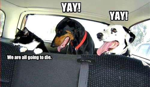 Car+Rides.+Cats+vs+Dogs.