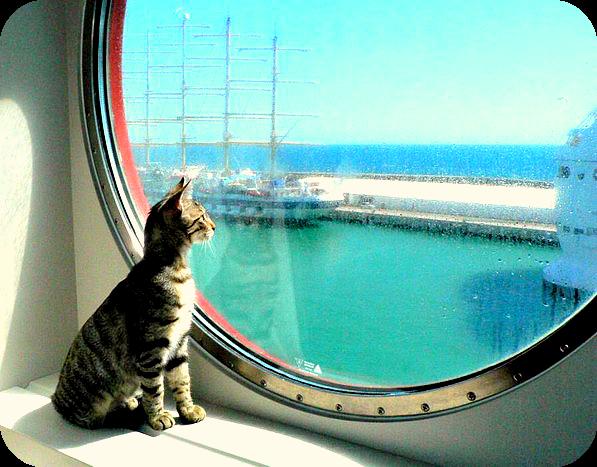 cats-at-sea
