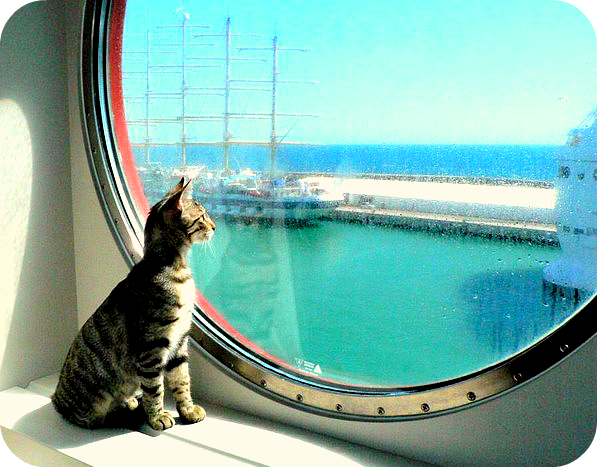 cats-at-sea