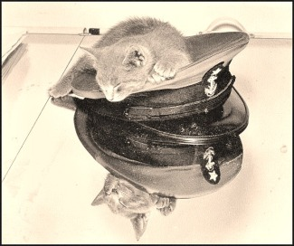 Here is Bilgewater, the mascot of the Coast Guard Academy, circa 1944.  He's modeling the new wartime grey cadet uniform.