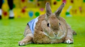 fat_bunny