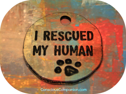 i-rescued-my-human_Who rescued Who_Conscious Companion