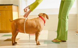 Being a Conscious Companion means we monitor the health of our companion animals