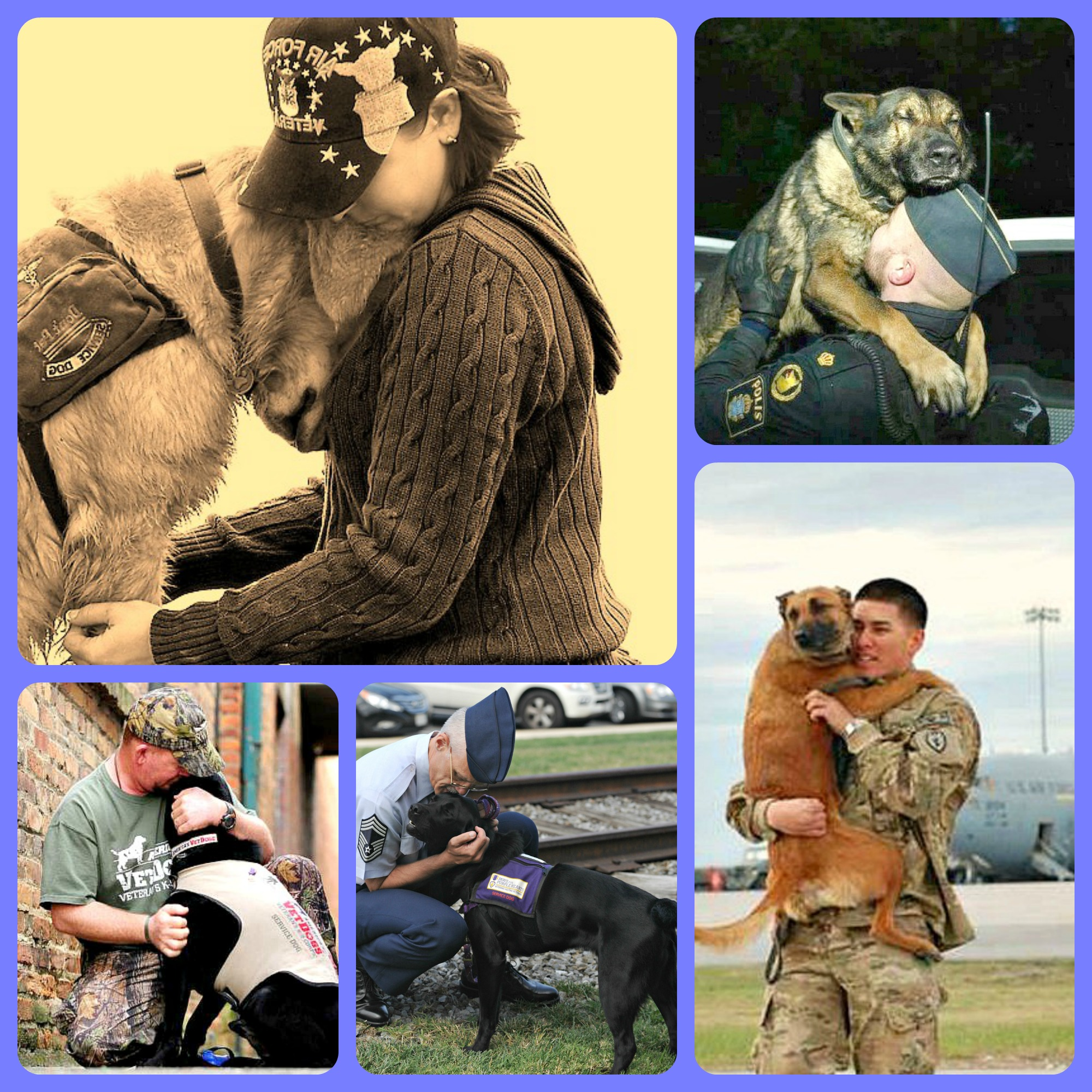 soldier dogs and soldiers veterans