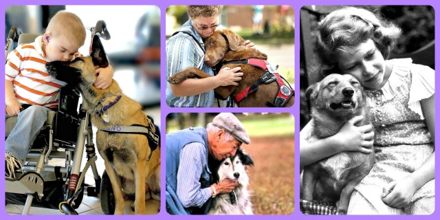 therapy dogs healing pets