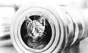A ship's cat on the Royal Australian Navy's HMAS Encounter, 1914-1918