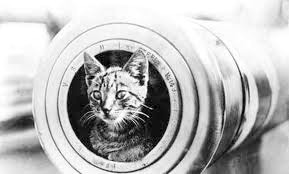 A ship's cat on the Royal Australian Navy's HMAS Encounter, 1914-1918