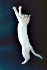 All cats need daily mental and physical stimulation