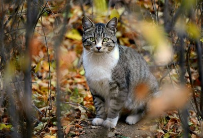 Feral Cats Belong Outdoors. They have been along side humans for 10,000 years. We can help them by spaying and neutering them, then leaving them be.