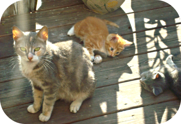 """Mama Cat"" and her kittens.  Mama Cat was a feral cat that lived around my house in New Orleans. I TNR (spayed and released) her and then spayed and neutered her kittens and found homes for most of them.  I loved her so much."