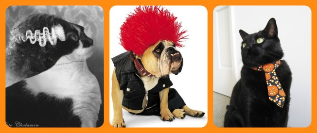 Please refrain from dressing your pets up in ridiculous costumes. It's not cool.