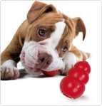 """Give them things to chew on and play with to occupy them while they are in their """"safe hideout""""."""