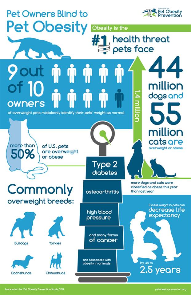 90 percent of pet owners of overweight dogs and cats do not know their companions need to shed some pounds.